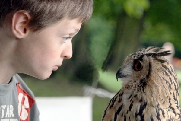 Conversation with a rescued owl